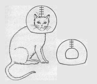 защитный воротник кошки