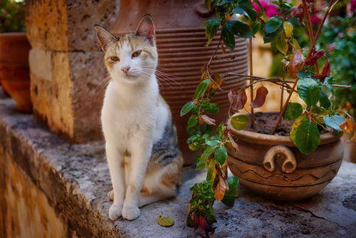 витамины для кошек: виды, польза